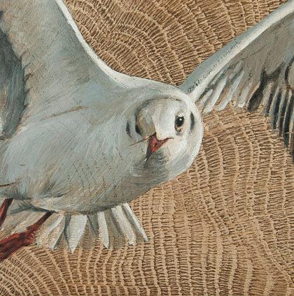 Vogelhoutje Kokmeeuw