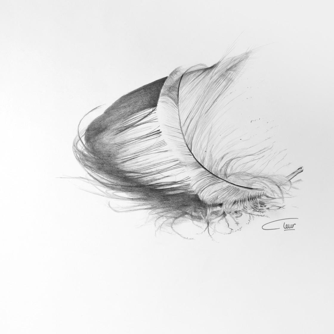 tekening Veer