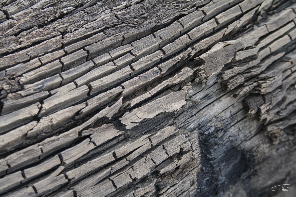 Structuren oude boom