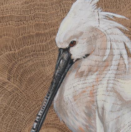 Vogelhoutje lepelaar