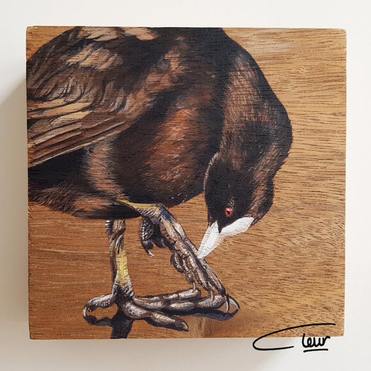 vogelhoutje Meerkoet